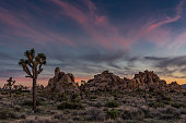 Subtle Sunset Over Joshua Tree and Boulders