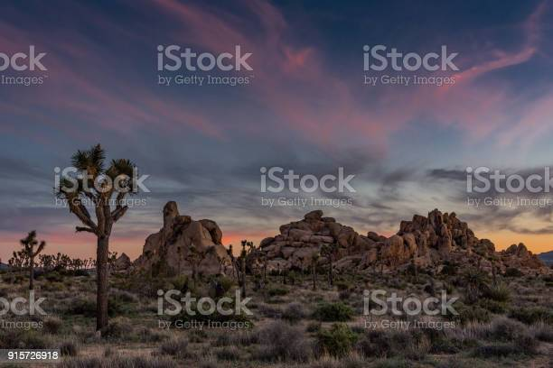 Photo of Subtle Sunset Over Joshua Tree and Boulders