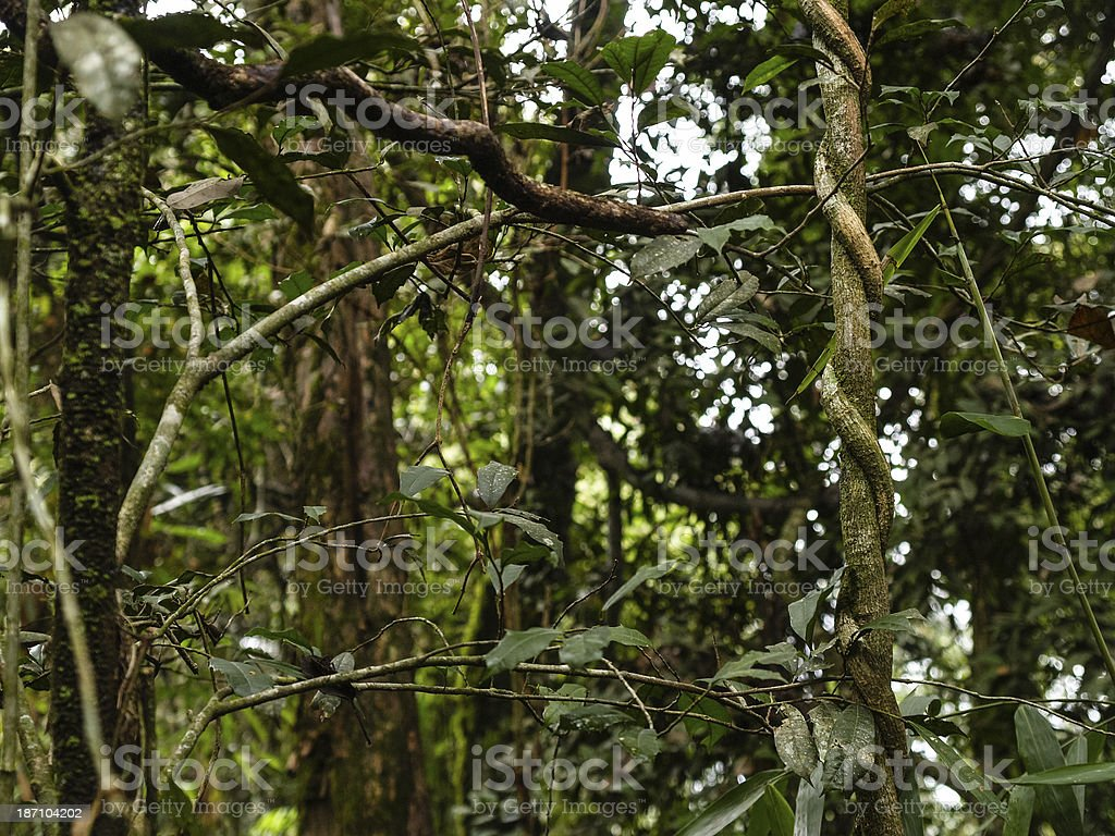 Subtropical forest in Paraguay, South America stock photo