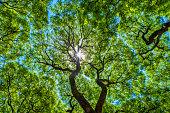 istock Subtropical forest, Lezama Park, Buenos Aires, Argentina 1201502337