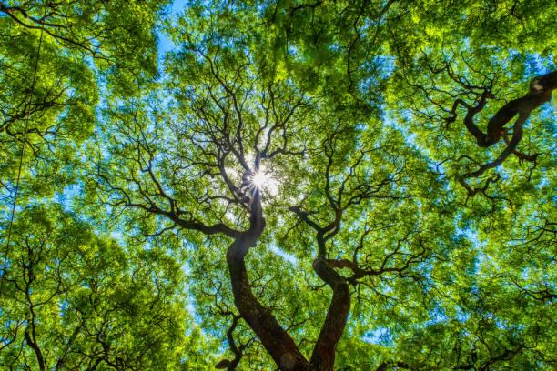 Subtropischer Wald, Lezama Park, Buenos Aires, Argentinien – Foto