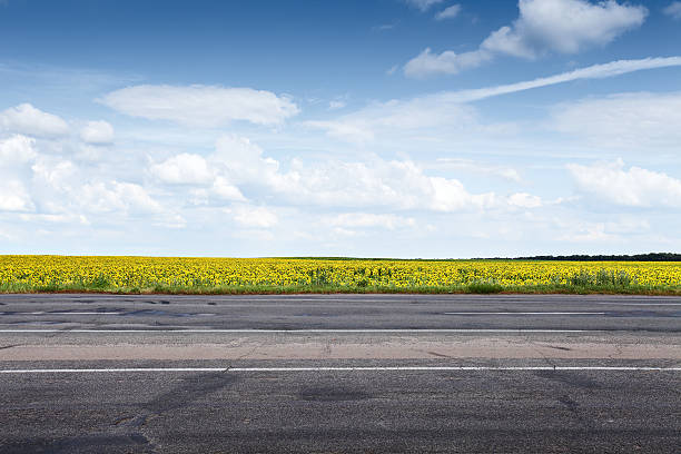 Suburb asphalt road and sun flowers Suburb asphalt road and sun flowers field. Summer landscape side view stock pictures, royalty-free photos & images