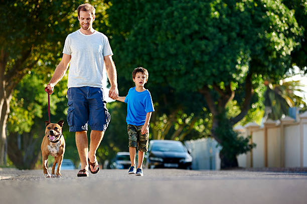suburb dad dog stock photo