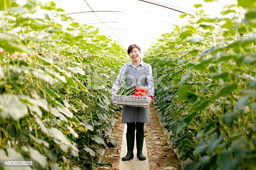 istock Suburban agriculture 480603688