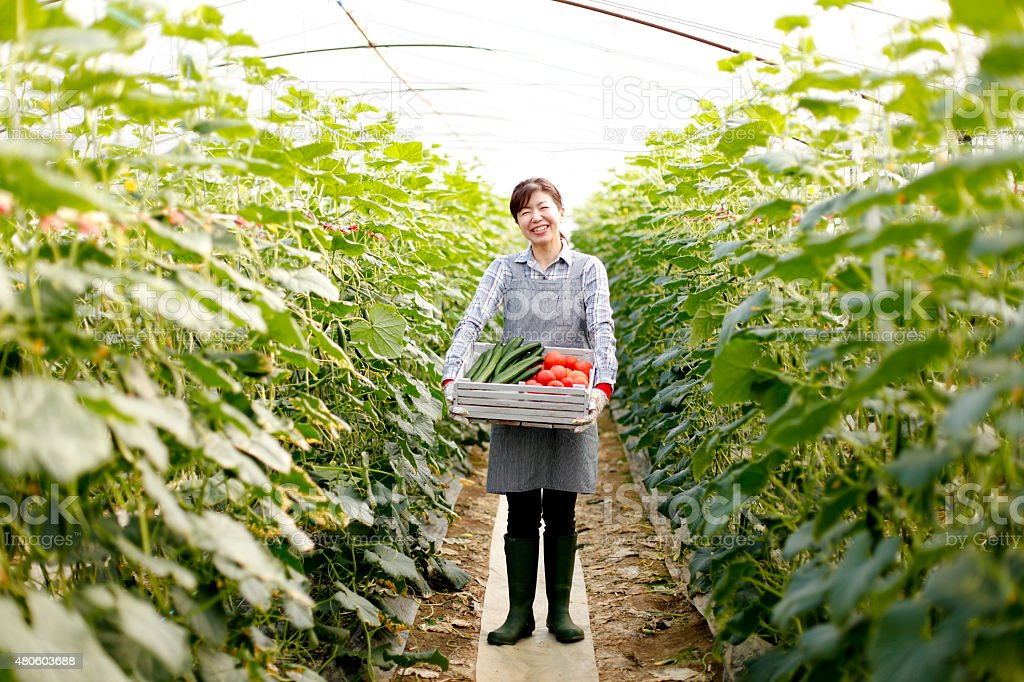 Suburban agriculture stock photo