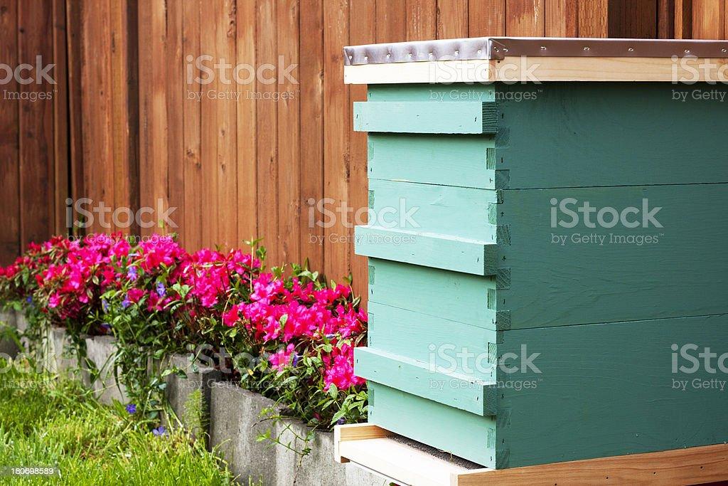 Suburban Backyard Beekeeping stock photo