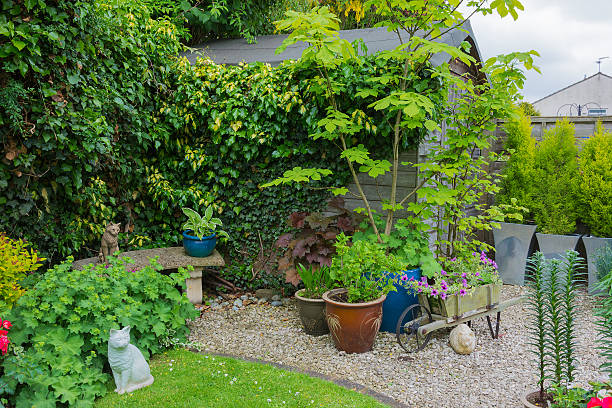Suburban Garden With Shed And Plant Containers stock photo 465724821 ...