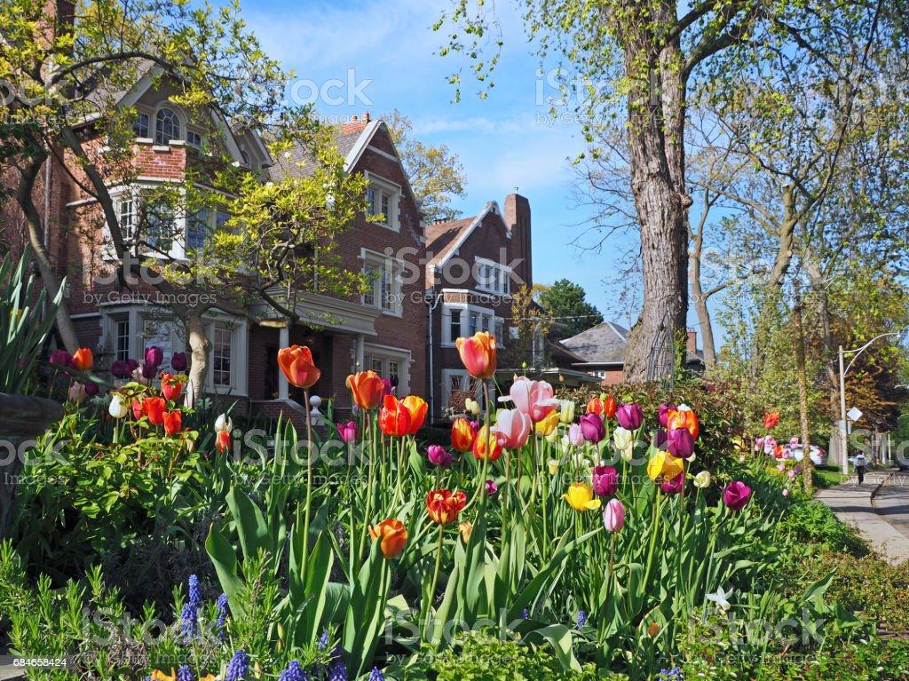 suburban garden with spring flowers stock photo
