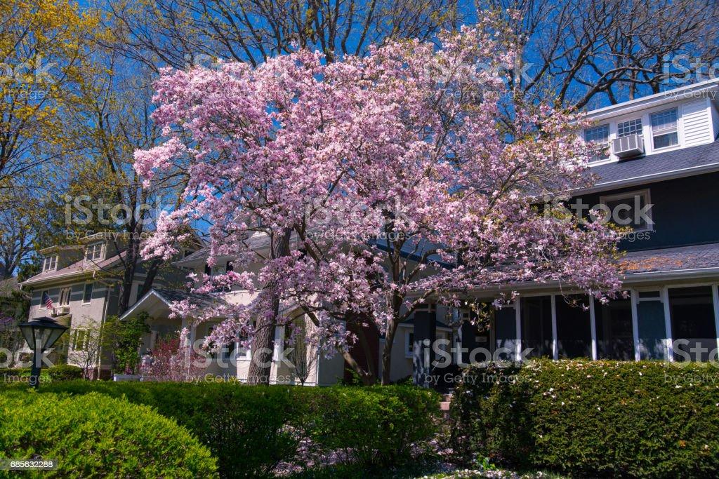 郊區的房子 免版稅 stock photo