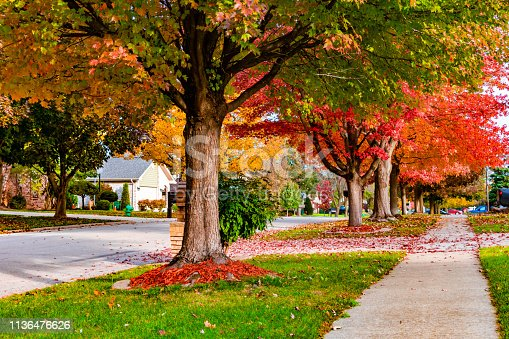 A suburban neighborhood sidewalk and street with colorful trees during autumn