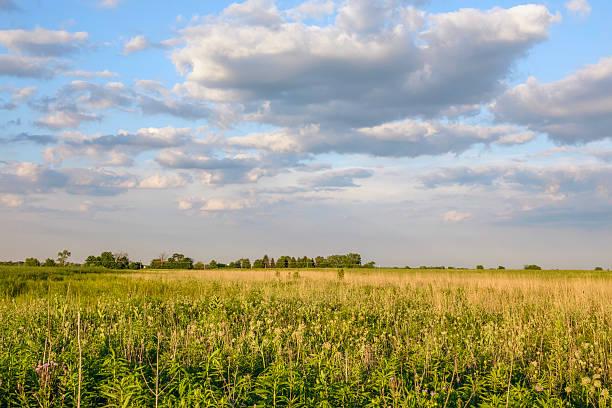 Suburban prairie in summer