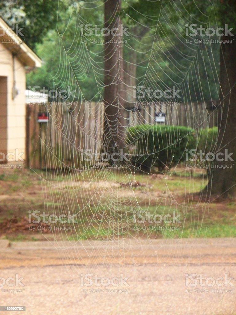 Suburban Spider Web stock photo