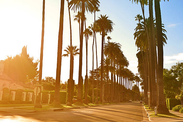 Suburban street lined with palm trees in early morning light stock photo