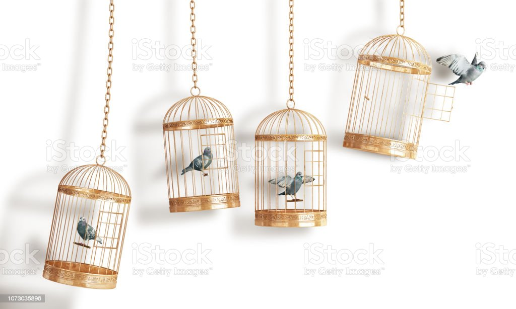 Success concept. Open bird's cell isolation on a white background. 3d illustration stock photo