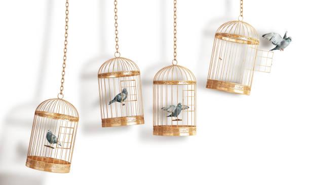 succes concept. open bird's cel isolatie op een witte achtergrond. 3d illustratie - kooi stockfoto's en -beelden