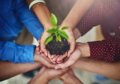 High angle shot of a group of businesspeople holding a plant growing in soil