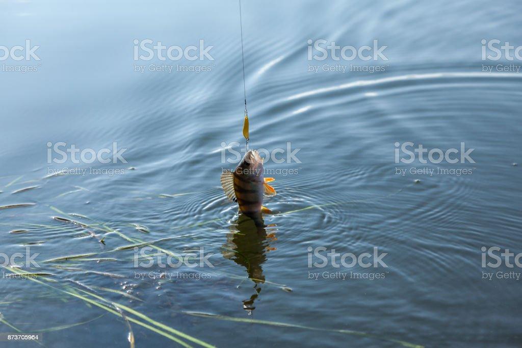 Successful catch stock photo