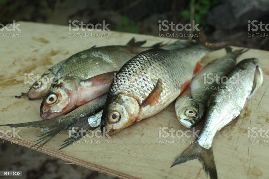 successful fishing stock photo