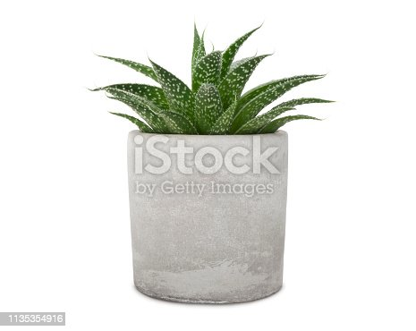 Succulent pant in cement pot isolated on white (excluding the shadow)