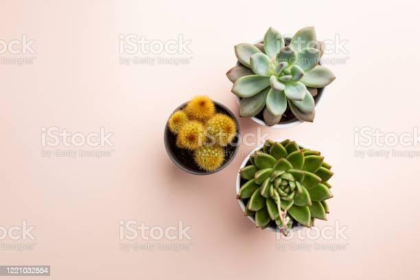 Succulent and cactus plants picture id1221032554?b=1&k=6&m=1221032554&s=612x612&h=ssun7pyltgdvei2uxescgpmvz 1 ohor lqaaf2grpk=