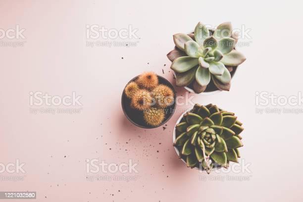 Succulent and cactus plants picture id1221032580?b=1&k=6&m=1221032580&s=612x612&h=vxxnhj1rjfa i96txljb ce5poke7tg6yedvzk3ukco=