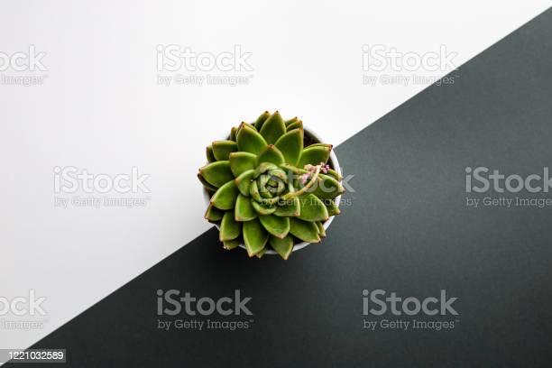 Succulent and cactus plants picture id1221032589?b=1&k=6&m=1221032589&s=612x612&h=ao ybtwnzzxcazzx5fq x3ucv9ut6ten20fvsitfema=