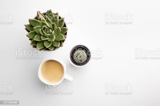 Succulent and cup of coffee picture id1221032567?b=1&k=6&m=1221032567&s=612x612&h=kb3dwuetwns 8um50hemfidsmd3o6lmvahkkr7dew1q=