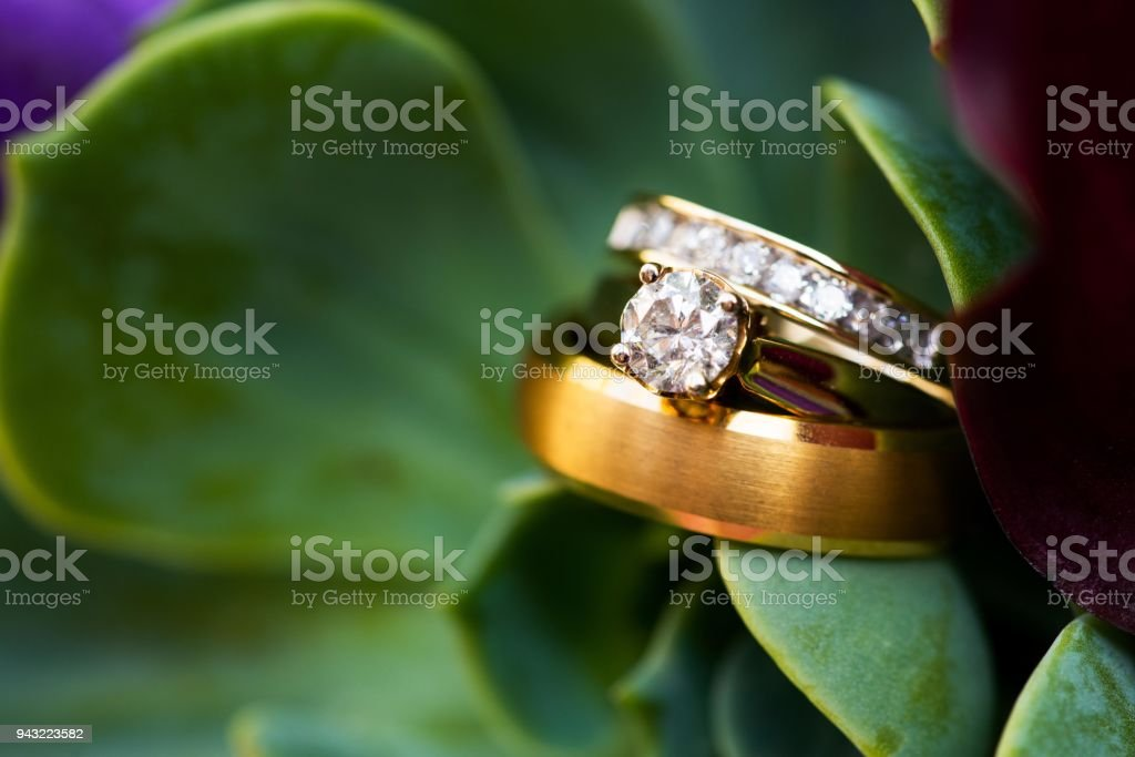 Succulent and rings of gold stock photo
