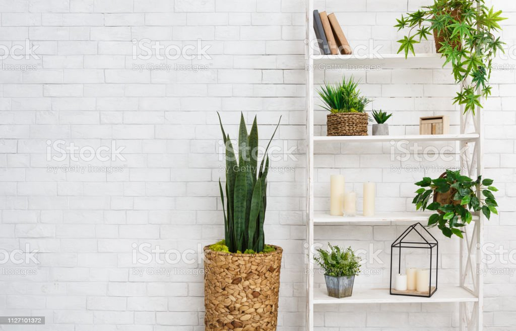 Succulent And Various Plants Over White Wall Stock Photo Download Image Now Istock