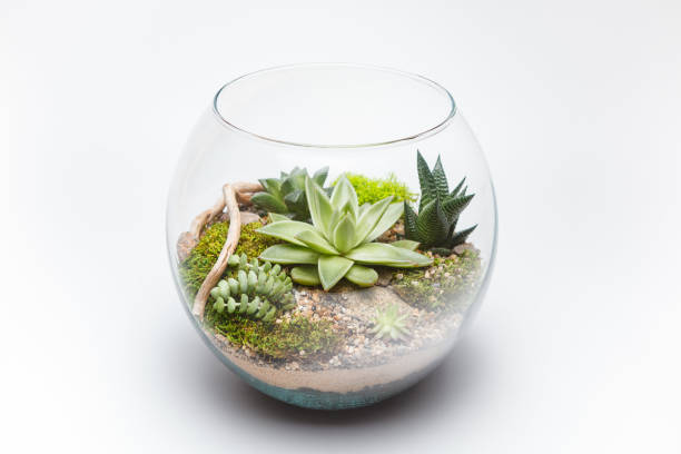 Succulent arrangement in a glass vase (terrarium) stock photo