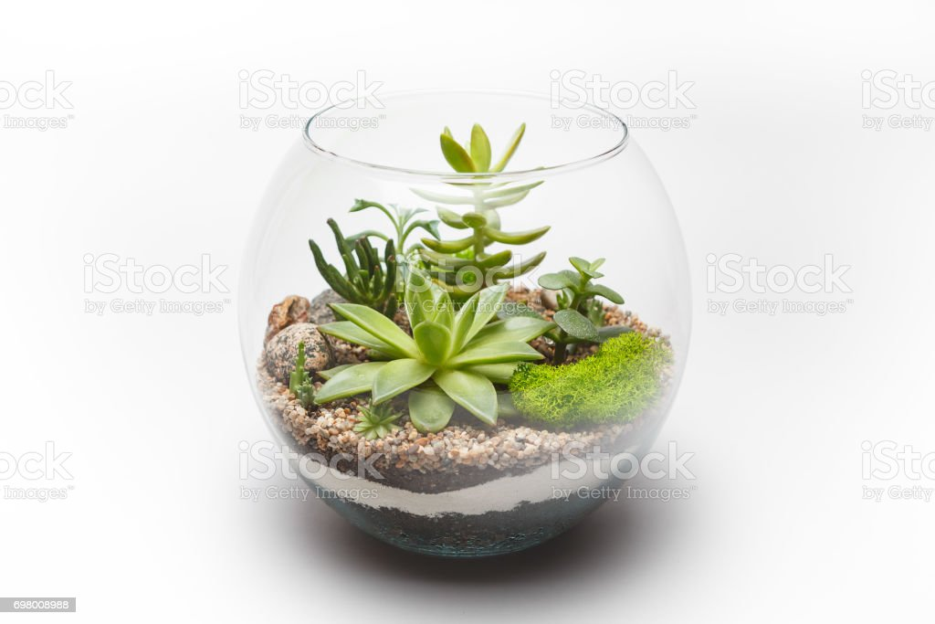Succulent Arrangement In A Glass Vase Stock Photo More Pictures Of