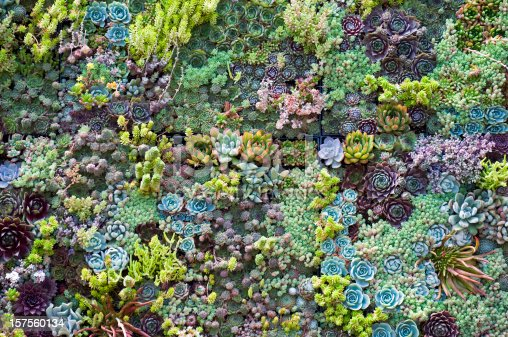 Background of mixed succulents.
