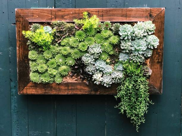 Succulent Box Wall Art Series Wooden box container of succulents mounted on wooden wall in lush New England coastal garden. sedum plant stock pictures, royalty-free photos & images