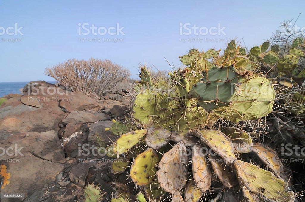 Succulent Cactus Plant  In the Desert stock photo