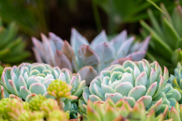 Succulent flowerbed in Ornamental park