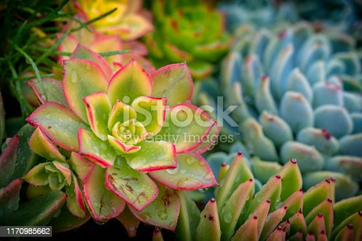 Succulent flowerbed with raindrops