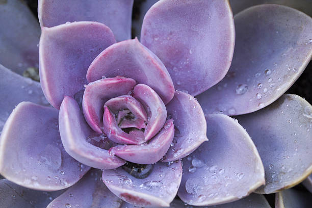 Succulent flowerbeds stock photo