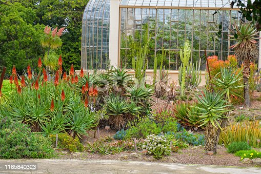 A Succulent garden with a variety of plants.