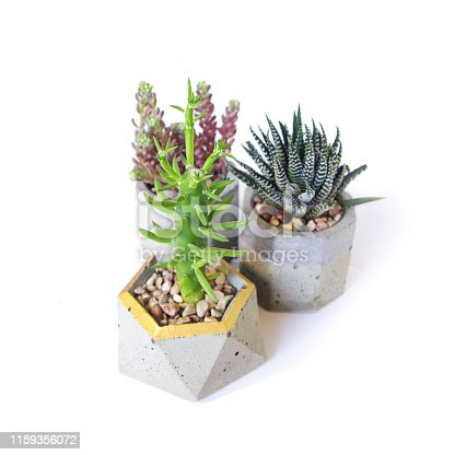 succulent haworthia in concrete pot. isolated succulent flower in white background. cement original pot with house plant.