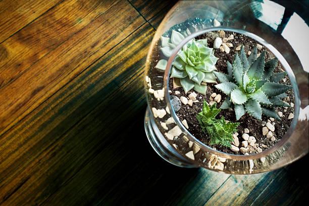 Succulent in Glass Vase stock photo