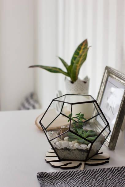 sukkulenten in metallrahmen terrarium zu hause details des skandinavischen interieurs - terrarienpflanzen stock-fotos und bilder