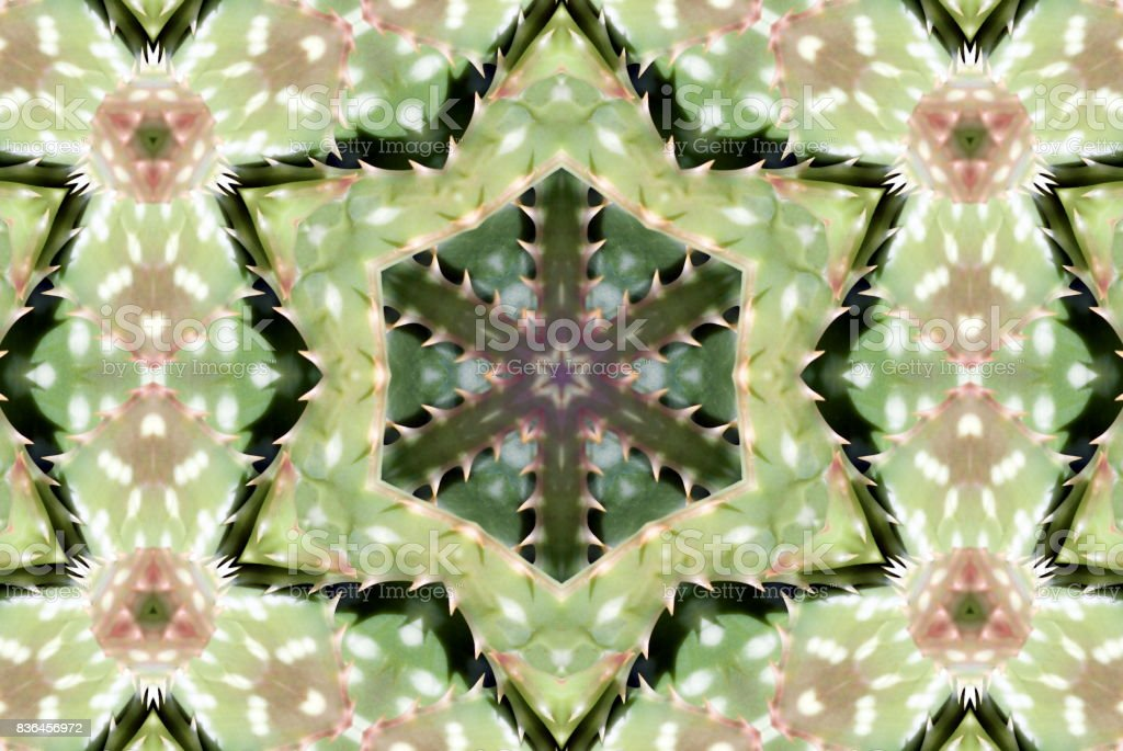 Succulent Mandala stock photo