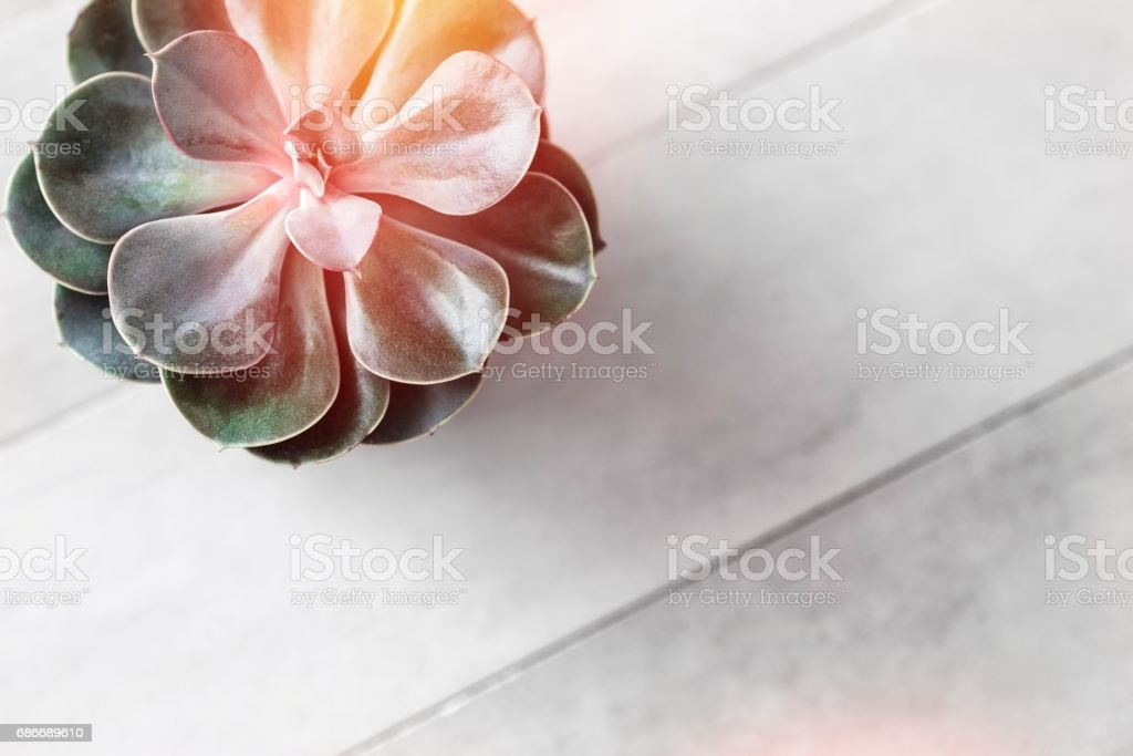 Succulent or cactus pot on gray concrete table stock photo