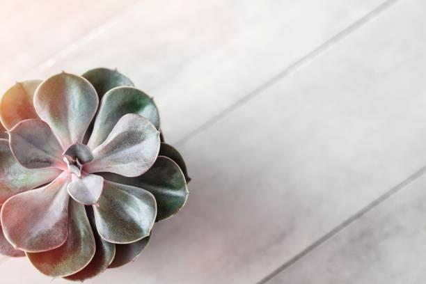 Pote de suculentas o cactus en mesa de hormigón gris - foto de stock