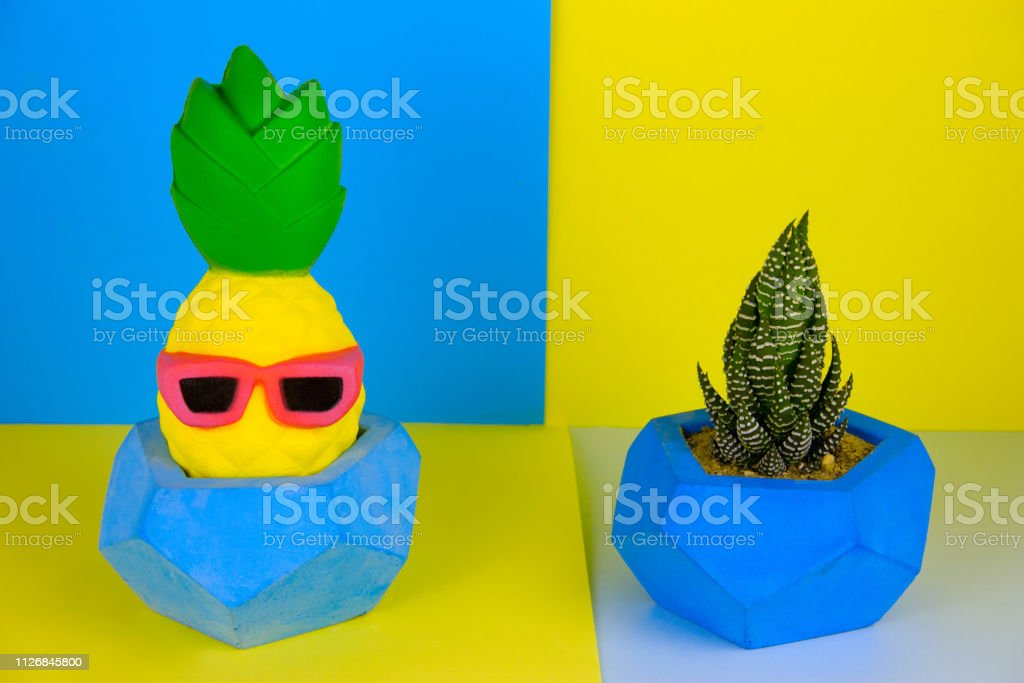 succulent plant and funny pineapple toy in concrete pot on blue and...