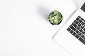 succulent plant and laptop