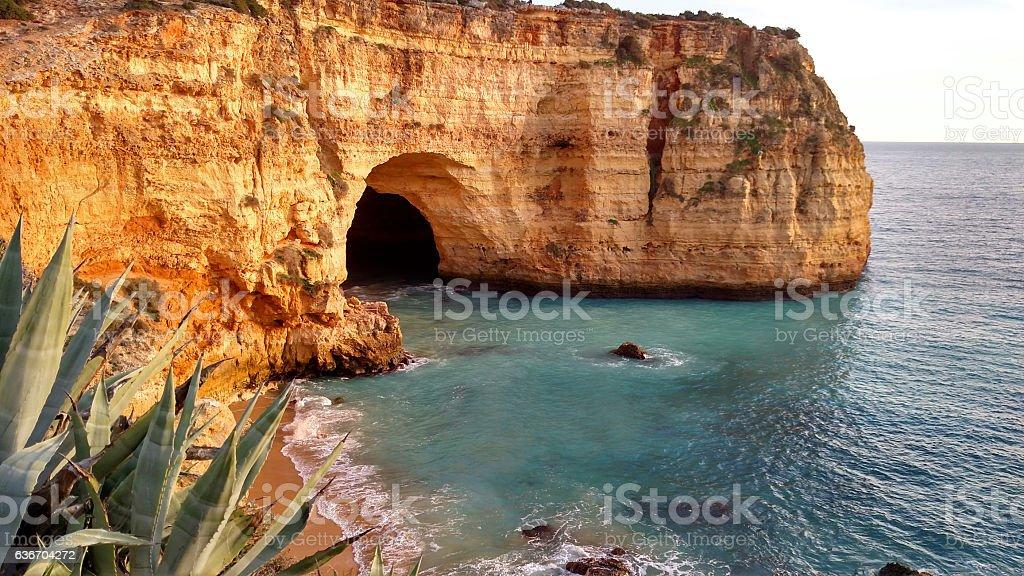 Succulent plant and sea cave Algarve seacoast Carvoeiro Portugal stock photo
