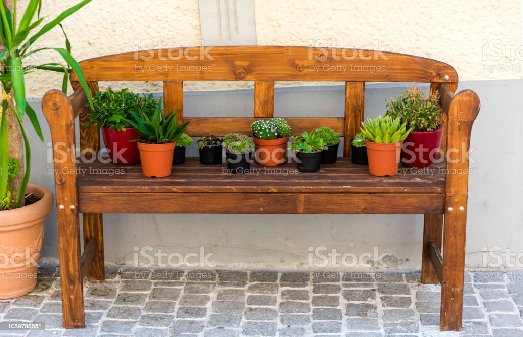 Phenomenal Succulent Plant Flower In Bench Stock Photo Download Image Caraccident5 Cool Chair Designs And Ideas Caraccident5Info