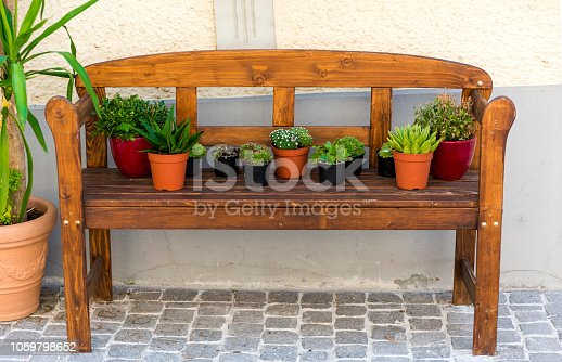 Succulent plant flower in bench