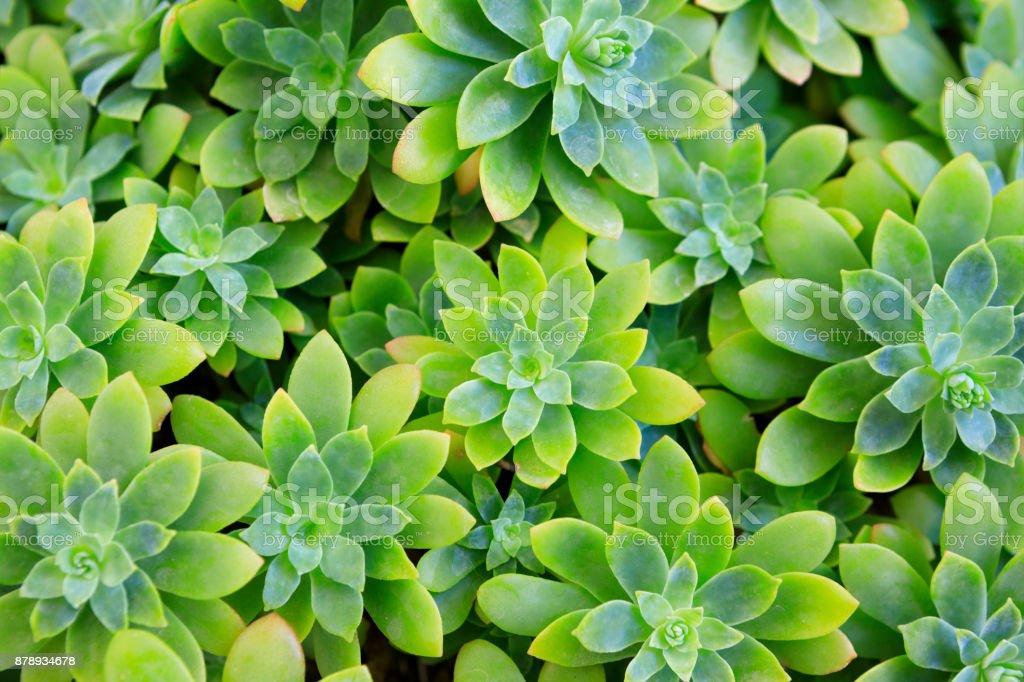 Etli bitki çiçek - Royalty-free Ağaç Çiçeği Stok görsel